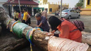 พะเยาแห่ขอเลขเด็ดต้นตุ้มโบราณอายุกว่า100ปี อาสาไทยยืนยัน Thai Reference