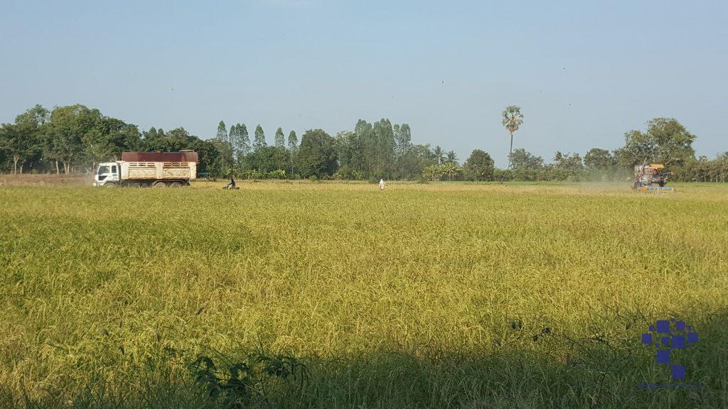 สุพรรณบุรี ภัยแล้งนาข้าวขาดน้ำชาวนาต้องซื้อน้ำใส่นาข้าว อาสาไทยยืนยัน Thai Reference